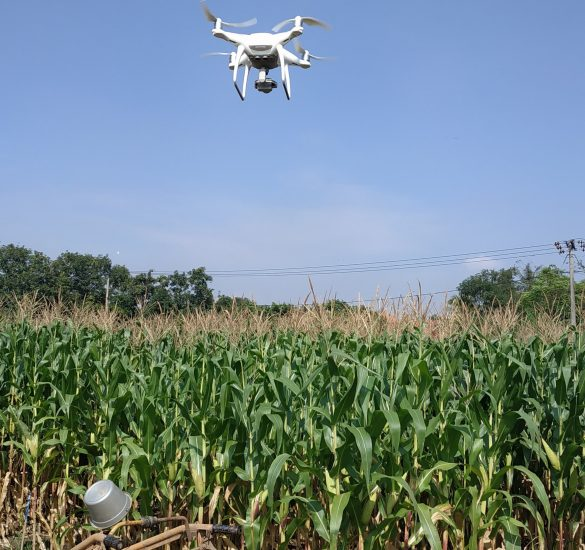 Remote Sensing for Future Protection on Crop